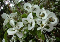 El Mundo de Olga y Daniel: Galería de flores raramente vistas - Un envío de G...