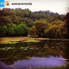 Gracias @samararreola#mascota #sierralago #paradise