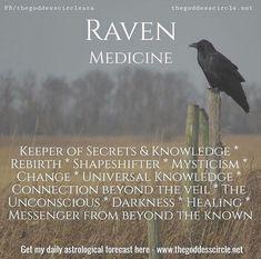 Medicine - Witches Of The CraftĀ . -Raven Medicine - Witches Of The CraftĀ . Raven Spirit Animal, Animal Spirit Guides, Raven Totem, Raven Art, Animal Meanings, Animal Symbolism, Kitchen Witch, Magick, Witchcraft