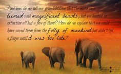 And how do we tell our grandchildren that the earth once teemed with magnificent beasts, but we hunted to extinction all but a few of them? How do we explain that we could have saved them from the folly of mankind but didn't lift a finger until it was too late? #animals #conservation #compassion #elephants #hunting #humanity