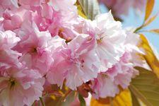 Prunus dulcis (Almond Oil)