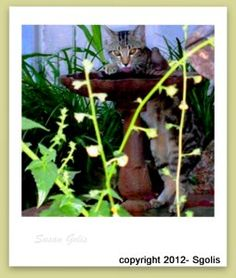 1000 Images About Keeping Animals Out Of My Garden On Pinterest Cats Gardens And Flower Beds