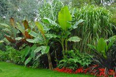 The Garden of Eaden: cold hardy exotic plants for a tropical garden Tropical Garden Design, Tropical Landscaping, Garden Landscaping, Tropical Gardens, Garden Pool, Tropical Plants Uk, Garden Care, Summer Garden, Landscaping Ideas