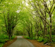beautiful path through the forest | Lubec and Eastport ME, Campobello Island, Canada: Extreme ...