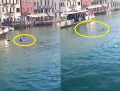 African Migrant Left To Drown In Venice Grand Canal As Onlookers Film Him,Laugh (VIDEO)