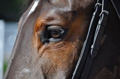 How to groom the eye area of your horse! http://www.proequinegrooms.com/tips/health-and-well-being/grooming-the-eye-area-of-your-horse/