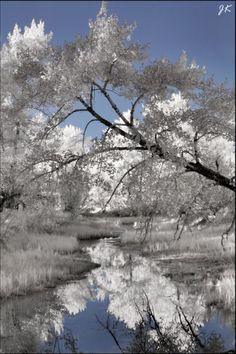 Infrared Photo #InfraredPhotography #Infrared #Photography