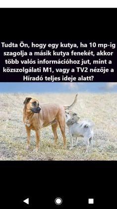 Dogs, Animals, Animales, Animaux, Animal Memes, Animal, Pet Dogs, Dog, Animais