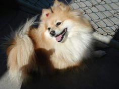 Chulada de perra