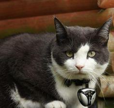 Eyenimal Cat Video Camera – $99