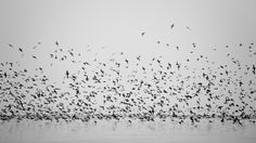 Black Texture Nature Birds Lake And White Animals Image Hd   Wallpaper