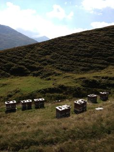 www.swissalpinehoney.com_Beehives in the Swiss mountains, this is where my heather honey is made Honey Brand, Take Me Over, Lovers, Passion, Mountains, World, Travel, The World, Trips
