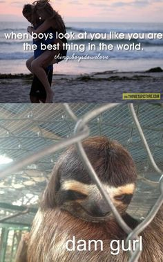 I pinned this because it made me laugh out loud.....and it's a sloth