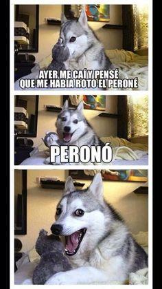 Perro chiste humor husky