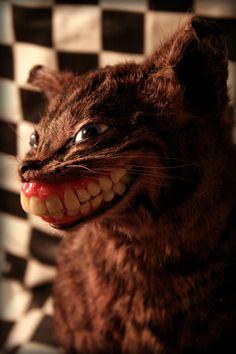 Taxidermy Cheshire Cat by Amanda Sutton Bad Taxidermy, Taxidermy Jewelry, Bone Crafts, Pussycat Dolls, Moonflower, Bad Art, Cheshire Cat, Distortion, Weird And Wonderful