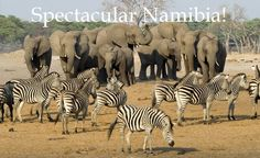 6 Days Signature Camping Safari Tour in Tanzania and explore this exotic place. Get travel guides and plan your trip to Tanzania. Get best offers on your Tanzania Tour packages. Book Now! African Animals, African Safari, Chobe National Park, National Parks, Amazing Animals, Out Of Africa, Exotic Places, Zimbabwe, Zebras