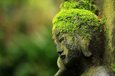 Zen of Moss.