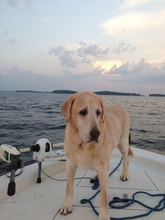 Garth: A Tribute to the Labrador that Inspired our Love for Labradors   #ItsaLabThing