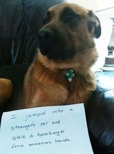 Best guilty dog sign.. just like Raven's shenanigans.