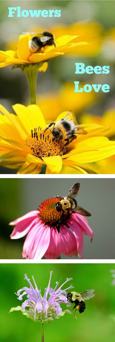 Flowers Bees Love - find out what flowers to plant in your garden to attract bees.