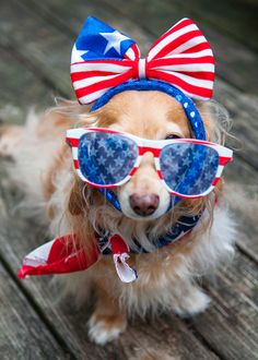 Even your dog will dress up with American spirit to be festive this 4th of July.