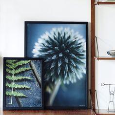 """Stikkejavert"" and ""Bregne - photo art from Unikaposters."