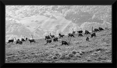 Randonnées en noir et blanc...: Crêtes du Haut Jura