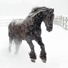 Frolicking on a frosty winter day/ I saw this a few winters ago, and will never forget the beauty of it.