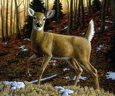 prints of deer images | Whitetail deer - Painting - Nature Art by Crista Forest