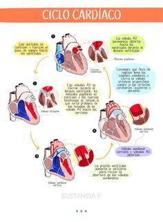 Medicine Notes, Medicine Student, Medicine Journal, Studying Medicine, Nursing School Notes, College Notes, Biology Lessons, Medical Anatomy, Bullet Journal School