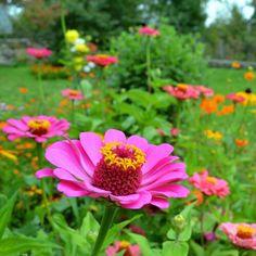 Summer flowers,  pink flower closeup Summer Flowers, Pink Flowers, Plants, Photography, Photograph, Photography Business, Flora, Photoshoot, Fotografie