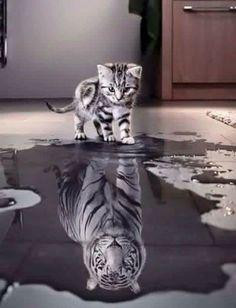 Believe in yourself! - Imgur