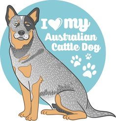 Australian Cattle Dog (Blue Heeler) by valexn