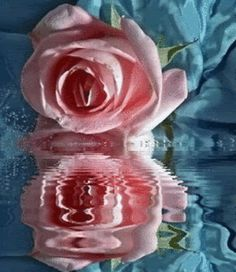 animation for smell the roses - Google Search