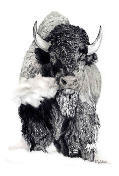 Pencil Drawing Color Bison Bull, pencil drawing, Robert M. Animal Sketches, Animal Drawings, Pencil Drawings, Art Drawings, Drawing Animals, Buffalo Animal, Buffalo Art, Wildlife Paintings, Wildlife Art