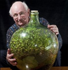 Terrarium: Still going strong: Pensioner David Latimer from Cranleigh, Surrey, with his bottle garden that was first planted 53 years ago and has not been watered since 1972 - yet continues to thrive in its sealed environment. Indoor Garden, Indoor Plants, Indoor Outdoor, Container Gardening, Gardening Tips, Vegetable Gardening, Mini Terrarium, Garden Terrarium, Bottle Terrarium