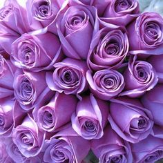 love the color of these roses @Juliana Le