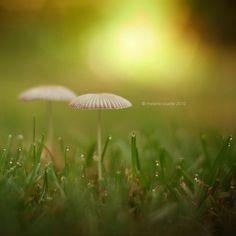 mushrooms and morning dew