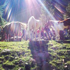 #albeinmalga_Cavalli Horses, Table, Sociology, Sky, Fotografia, Tables, Horse, Desk, Tabletop