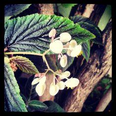 Mini flor! :) - @fabilage- #webstagram