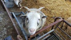 Seven Sisters Sheep Centre