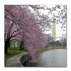 "Latitude Run Washington Blossoms Photographic Print on Wrapped Canvas Size: 14"" H x 14"" W x 2"" D"