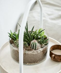 Bring nature inside with a self-contained DIY terrarium. Pot miniature cacti inside an IKEA vase. Christmas Gifts For The Home, Easy Diy Christmas Gifts, One Room Apartment, Urban Apartment, Mini Terrarium, Rama Seca, Cactus, Decoration Ikea, Best Home Interior Design
