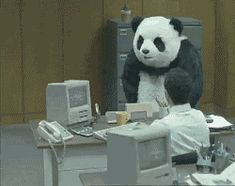Find GIFs with the latest and newest hashtags! Search, discover and share your favorite Fuck It GIFs. The best GIFs are on GIPHY. Anim Gif, Gif Animé, Animated Gif, Funny Videos, Funny Cats, Funny Animals, Panda Funny, Panda Panda, Big Panda