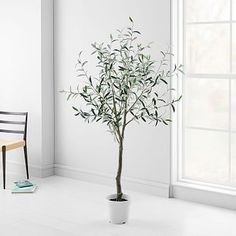 Shop the best collection of Faux Plants + Flowers at West Elm. A wide range of Faux Plants + Flowers with different prices and styles to meet all demands in Jeddah, Riyadh and all KSA. Lotus Plant, Palm Plant, Faux Plants, Indoor Plants, Indoor Trees, Real Plants, West Elm, Olives, Faux Olive Tree