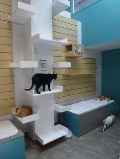 Senior Cat Room New Shelter Cat Run, Cat Walk, Cat Shelves, White Shelves, Animal Room, Cat Enclosure, Pet Furniture, Space Cat, Diy Stuffed Animals