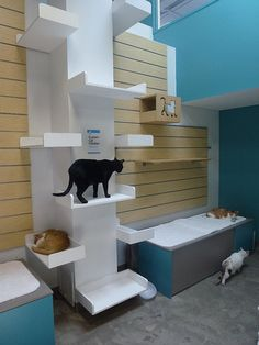 Cat Room Idea