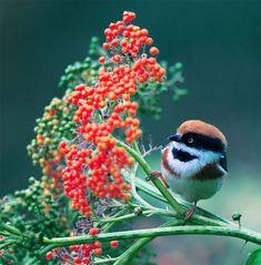 عکس های پرندگان زیبا