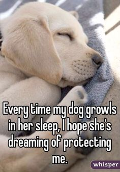 Every time my dog growls in her sleep, I hope she's dreaming of protecting me. #cute #animals