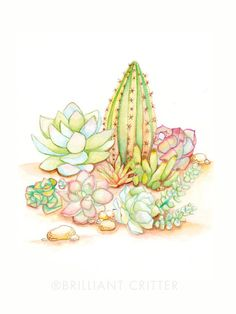 Succulent Painting  Watercolor Succulent Print by BrilliantCritter
